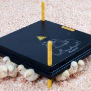 Kyllingemoder fra comfort / kumo