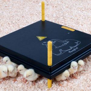 Kyllingemødre