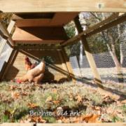 chicken-ark (8)